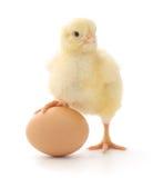 Pollo ed uovo Immagini Stock Libere da Diritti
