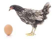 Pollo ed uovo Fotografia Stock Libera da Diritti