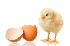 Pollo ed uovo del bambino su bianco Fotografia Stock