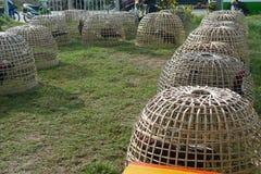Pollo en la jaula Imagen de archivo