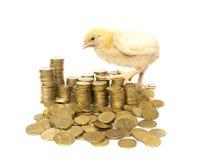Pollo fra le monete Immagini Stock Libere da Diritti
