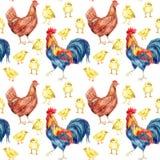 Pollo, gallina, gallo Pintura de la acuarela Foto de archivo