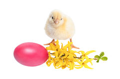 Pollo giallo del neonato isolato su bianco Fotografia Stock Libera da Diritti