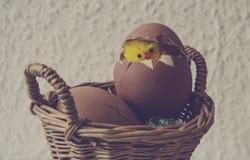 Pollo giallo in un uovo Immagini Stock Libere da Diritti