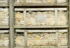 Pollo nella gabbia Fotografia Stock Libera da Diritti