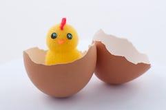 Pollo nelle coperture su bianco fotografia stock libera da diritti