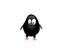 Pollo nero Fotografia Stock