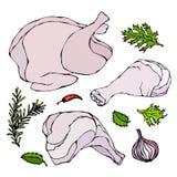 Pollo o parti del corpo della Turchia messe Raccordi, prosciutto, stinco con pelle ed erbe della carne dei gallinacei Isolato su  illustrazione vettoriale