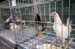 Pollo para la venta Imágenes de archivo libres de regalías