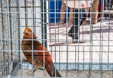 Pollo para la venta en mercado famoso de los granjeros en Sineu, Majorca Fotos de archivo