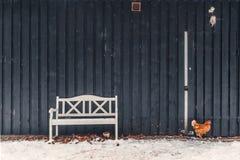 Pollo que busca la comida en el invierno Imagen de archivo libre de regalías