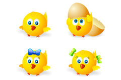 Pollo redondo Imagen de archivo libre de regalías