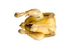 Pollo su un fondo bianco. Immagini Stock