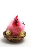 Pollo sul nido Fotografie Stock