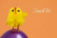 Pollo sull'uovo di Pasqua fotografie stock libere da diritti
