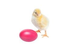 Pollo sveglio del bambino - fondo di pasqua Fotografia Stock