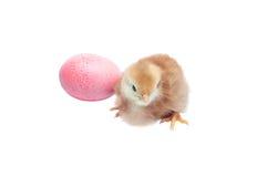 Pollo sveglio del bambino - fondo di pasqua Fotografia Stock Libera da Diritti
