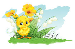 Pollo sveglio dell'illustrazione su un fondo dei fiori e del mughetto gialli Fotografia Stock Libera da Diritti