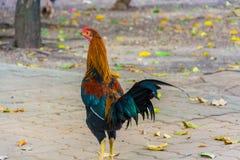 Pollo tradicional tailand?s Es colorido fotografía de archivo