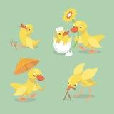 Pollo y anadón lindos Imagen de archivo libre de regalías