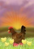 Pollo y gallina en la puesta del sol Fotografía de archivo libre de regalías