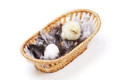 Pollo y huevo Fotos de archivo libres de regalías