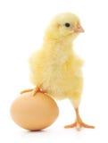 Pollo y huevo Imagen de archivo libre de regalías