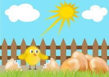 Pollo y huevos ilustración del vector