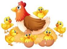 Pollo y polluelo aislados libre illustration