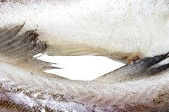 Pollock fish raw. Background of fresh raw fish stock photography