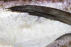 Pollock fish raw. Background of fresh raw fish stock image