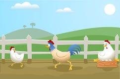 Pollos Imágenes de archivo libres de regalías