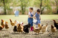 Pollos de alimentación de la niña fotografía de archivo