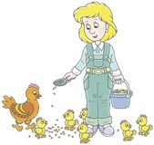 Pollos de alimentación de la mujer de las aves de corral Imágenes de archivo libres de regalías