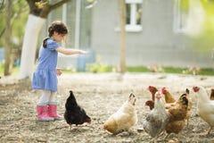 Pollos de alimentación de la niña Foto de archivo