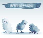 Pollos de la acuarela Imagenes de archivo