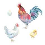 Pollos de la acuarela Foto de archivo