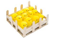 Pollos de Pascua Imagen de archivo libre de regalías
