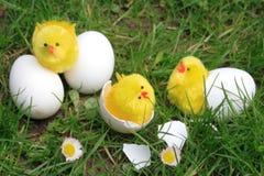 Pollos del este imagen de archivo