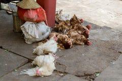 Pollos en la manera de comercializar Imágenes de archivo libres de regalías