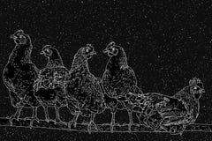 Pollos en perca Imágenes de archivo libres de regalías