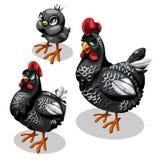 Pollos, madre, padre y pollo negros de la familia ilustración del vector