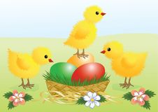 Pollos. Tarjeta de pascua Fotografía de archivo libre de regalías