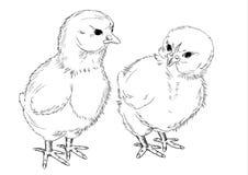 Pollos. Un gráfico a pulso. Fotografía de archivo