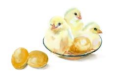 Pollos y huevos de la acuarela Fotografía de archivo libre de regalías