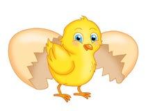 Polluelo ilustración del vector
