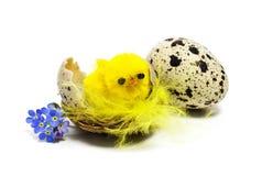 Polluelo de Pascua Imágenes de archivo libres de regalías