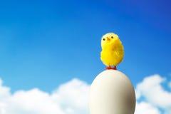 Polluelo de Pascua fotografía de archivo libre de regalías