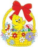 Polluelo de Pascua Imagen de archivo