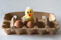 Polluelo de Pascua con los huevos Imagenes de archivo